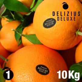 Oranges de Valence Navelines Deluxe 10 kg